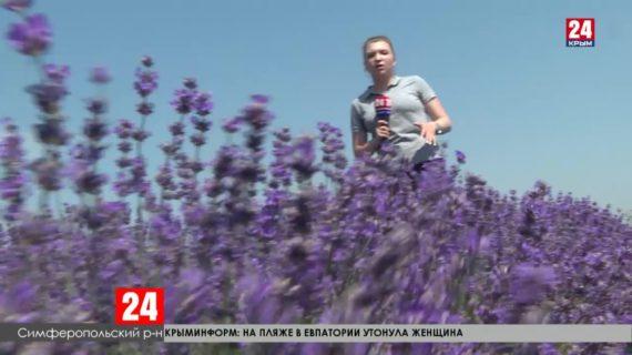Новости Симферополя. Выпуск от 03.07.20