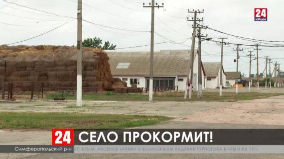 Как работают аграрии Крыма в условиях засухи