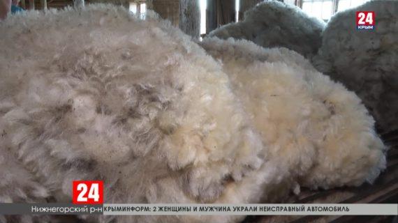 Первые 100 тонн шерсти – такой показатель дали крымские овцеводы