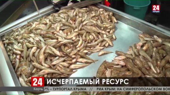 В Керчи жалуются на нехватку морской рыбы