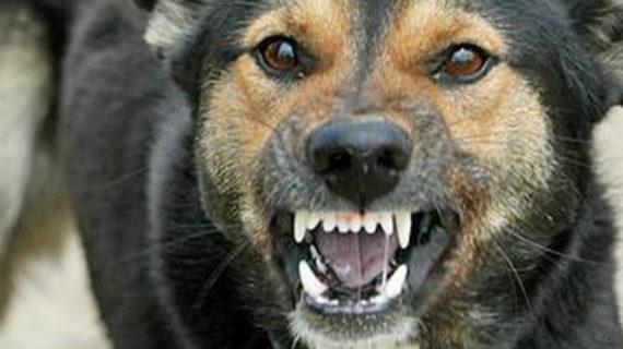 Бешеная собака жила на улице Принца Уэльского в Бахчисарае