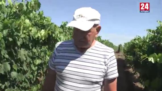Крымский фермер придумал собственную систему экономного орошения полей