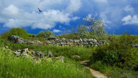 Учёные обнаружили средневековые жилища в Севастополе