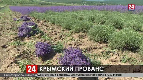 На увеличение лавандовых полей в селе Пионерское выделили более двух миллионов рублей
