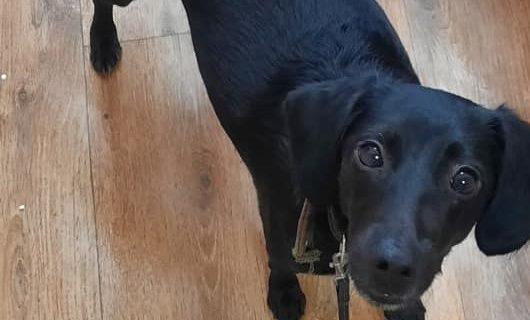 Среди пассажиров разбившегося на Тавриде микроавтобуса была собака