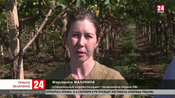 В Крыму стартовал сезон уборки винограда