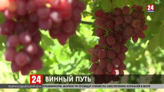 Первые 300 тонн винограда собрали местные аграрии