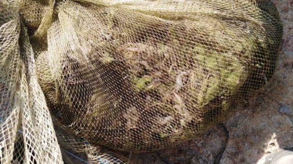 Крымчанина задержали за незаконную ловлю креветок на сумму более 1 млн рублей