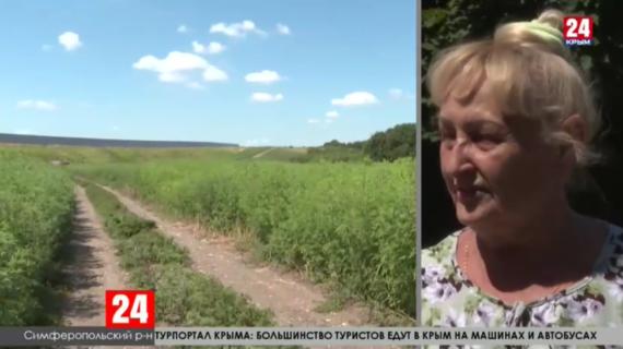 Около 300 тысяч гектаров амброзии обнаружили на территории Крыма