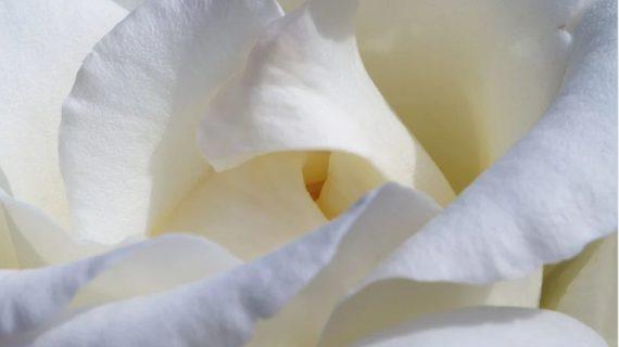 В конце сентября в Крыму пройдёт акция «Белый цветок» в помощь детям с особенностями развития