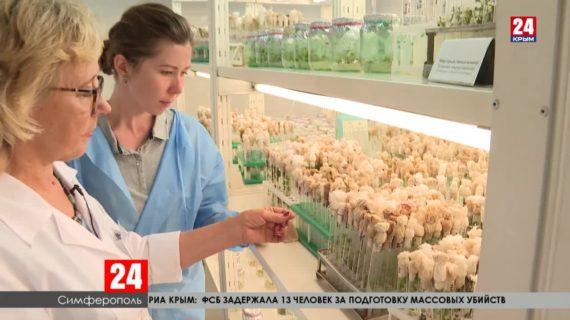 Крымские учёные выводят новые сорта и уникальные виды растений