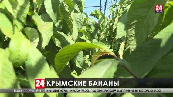На крымских рынках скоро появятся «северные бананы»