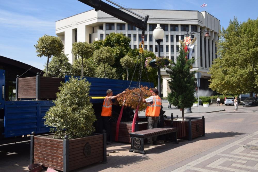 Вечнозелёные деревья начали высаживать в центре Симферополя