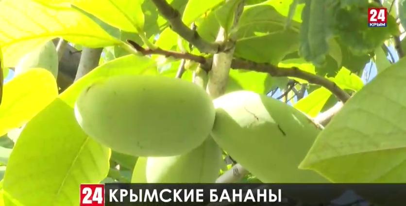 """В Крыму начнут выращивать """"северные бананы"""""""