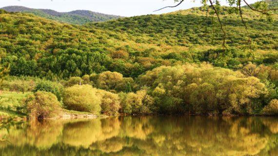 Аксёнов поздравил работников леса с профессиональным праздником