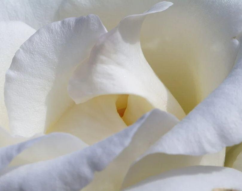В Керчи 26 сентября пройдет благотворительная акция «Белый Цветок»