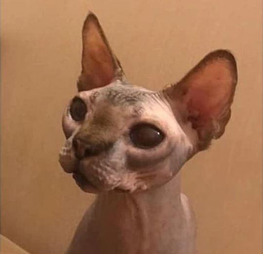 Кота, 6 лет жившего в запертом туалете, взяли в новую семью