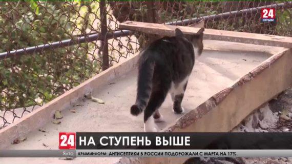 На пяти улицах Ялты идет капитальный ремонт лестниц