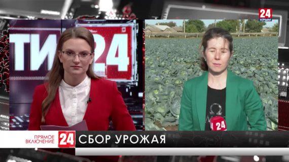 В садах и на плантациях Крыма продолжается сбор урожая