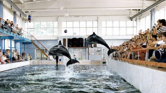 Карадагский дельфинарий временно прекращает представления для зрителей