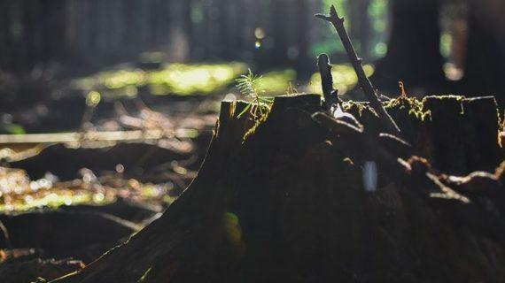 В Ялтинском заповеднике незаконно прокладывали дорогу, повреждая деревья