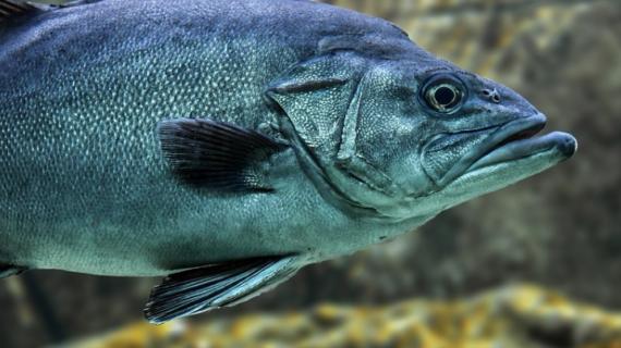 В Керчи инвестор вложит 317 миллионов в рыбное предприятие