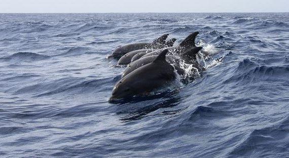 Карантинный бассейн для дельфинов достраивают в Крыму