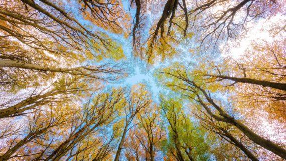 Глава Крыма поручил чиновникам объяснять жителям, почему вырубают деревья