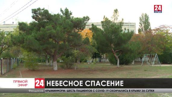 Новости восточного Крыма. Выпуск от 03.11.20