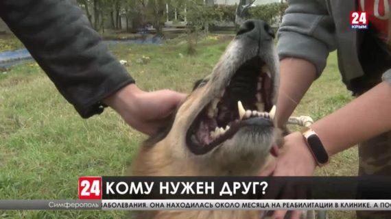 Приют для собак во дворе своего дома организовал симферополец Дмитрий Фролов