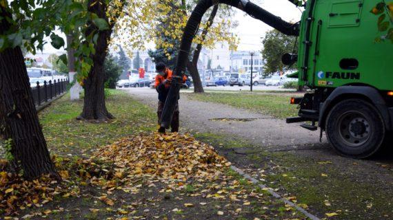 Жители Симферополя выступили против уборки листвы