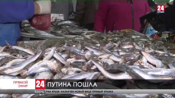 В Керчи уже продают знаменитую азовскую хамсу-сероспинку