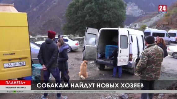 #Планета+. Коротко: Пожар в испанском аэропорту, брошенные животные в Карабахе, рождественская ёлка в Берлине