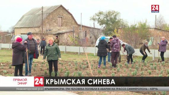 Новости восточного  Крыма. Выпуск от 27.11.20