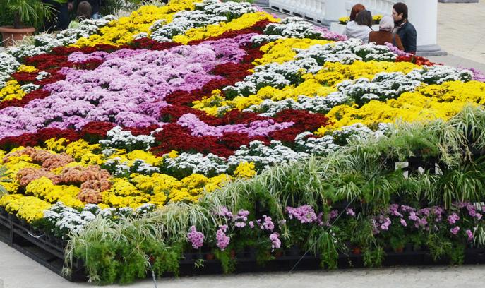 В Никитском ботаническом саду сделали бесплатный вход для пенсионеров и ветеранов на один день