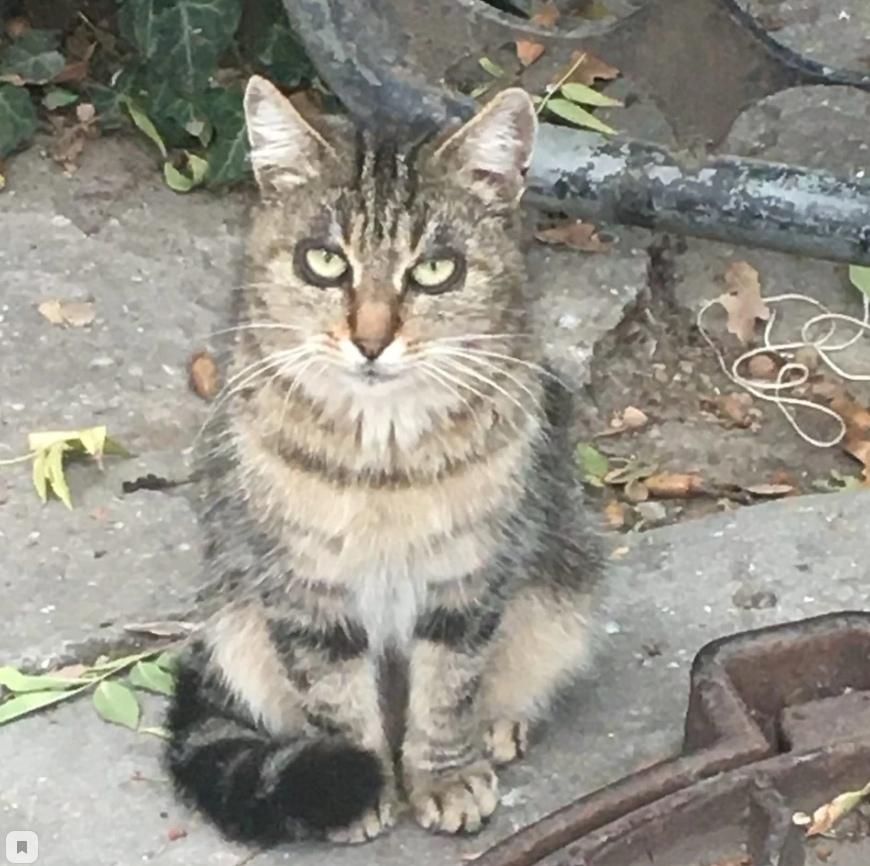 В Ялте обнаружили очень уставшего кота