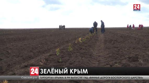 Площадь зелёных массивов Крыма увеличилась в этом году на 250 гектаров