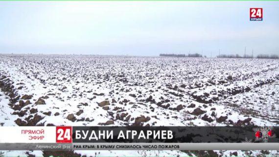 Зимние будни аграриев. Как сельхозпроизводители встретили первые морозы?