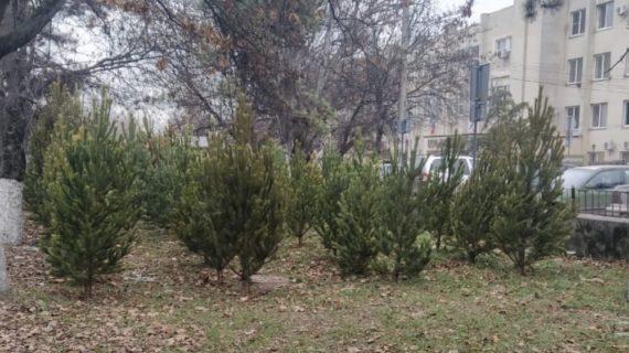 В Симферополе оштрафовали 14 человек за нелегальную продажу ёлок