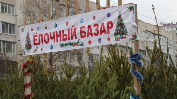 Ёлочные базары 2020 в Севастополе: Где купить ёлку на Новый год, адреса