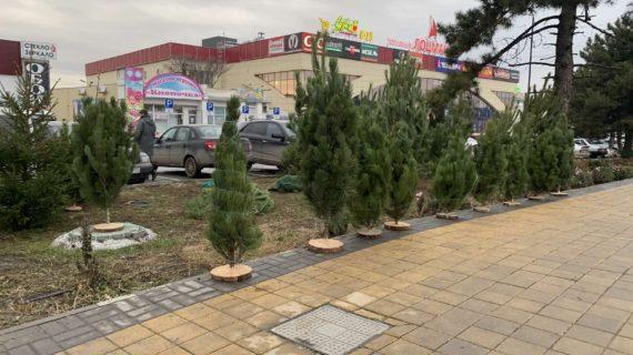 За неделю в Симферополе выписали 20 штрафов за незаконную продажу ёлок