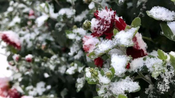 Какой будет погода в Крыму 17 января