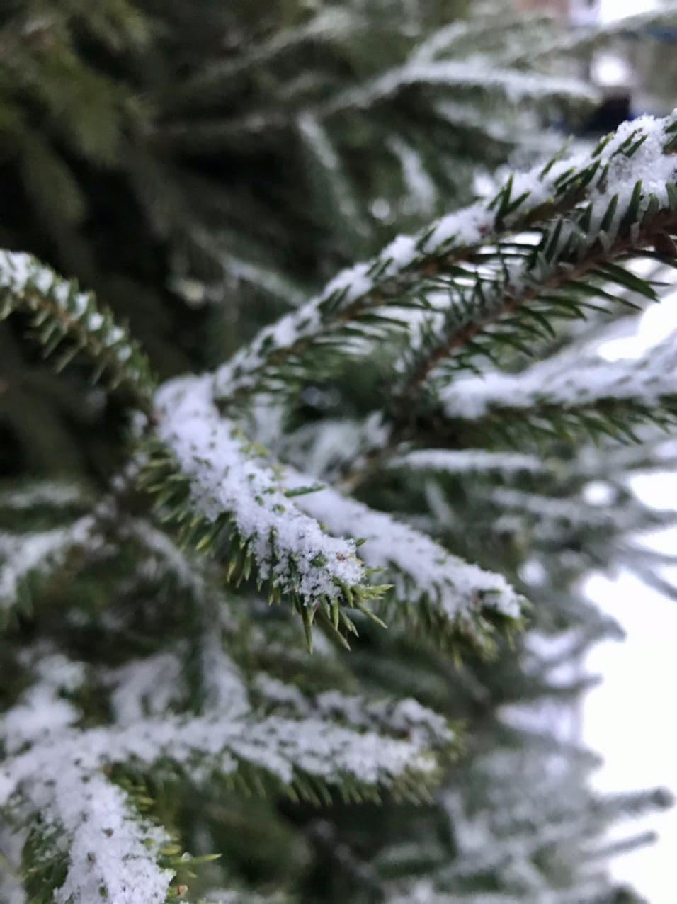 В лесах Крыма благоустроят 21 место отдыха