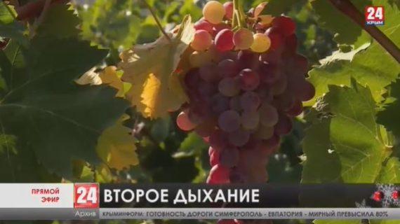 Новости Ялты. Выпуск от 11.12.20