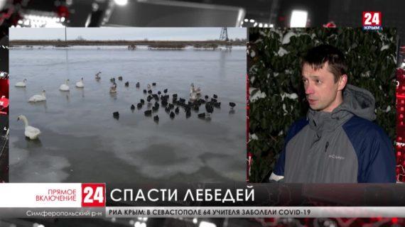 Как переживают морозы лебеди на озере Сасык-Сиваш под Евпаторией?
