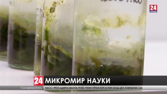 Новые препараты разработали в Научно-исследовательском институте сельского хозяйства Крыма