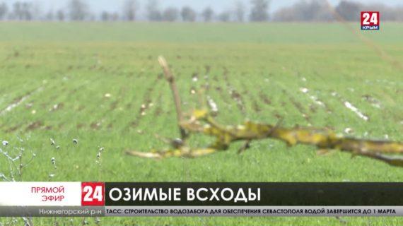 Новости восточного  Крыма. Выпуск от 21.01.21