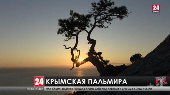 Как лучше провести новогодние каникулы в крымской Пальмире?