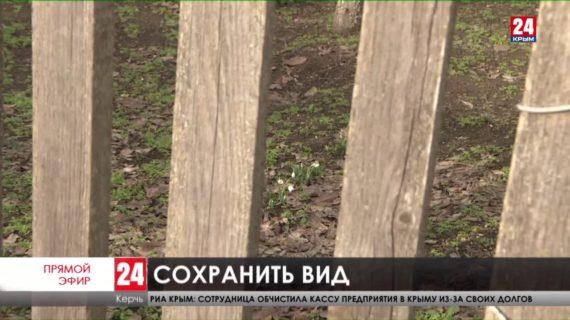 Раньше срока на керченском полуострове взошли первые