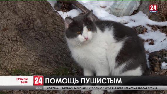 Не оставить в беде. Как в заморозки помочь бродячим котам и собакам?